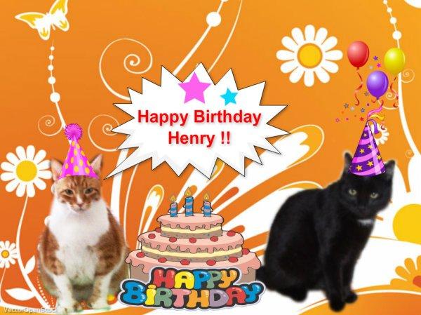 Happy 6th Birthday Henry | My Three Moggies