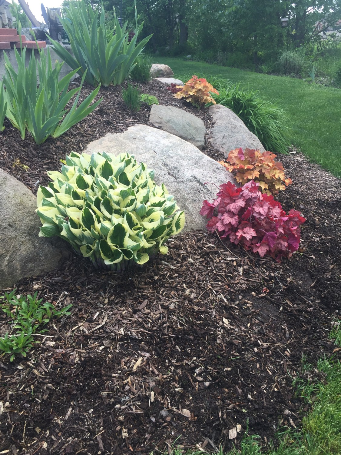mulched garden bed with large rocks, hosta plant, coral bells and other plants