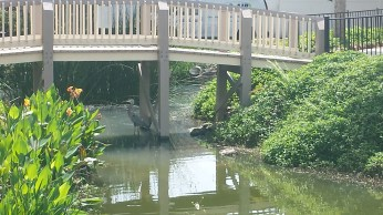 A heron in the water under a bridge