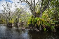 Parc national des Everglades Floride