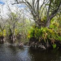 Parc national des Everglades Floride