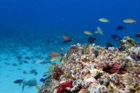 plongee au gili air bali indonesie