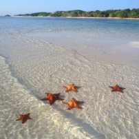 etoile de mer a sana island en république dominicaine