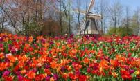 keukeunhof amsterdam