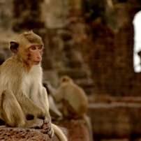 monkey-1861061_960_720