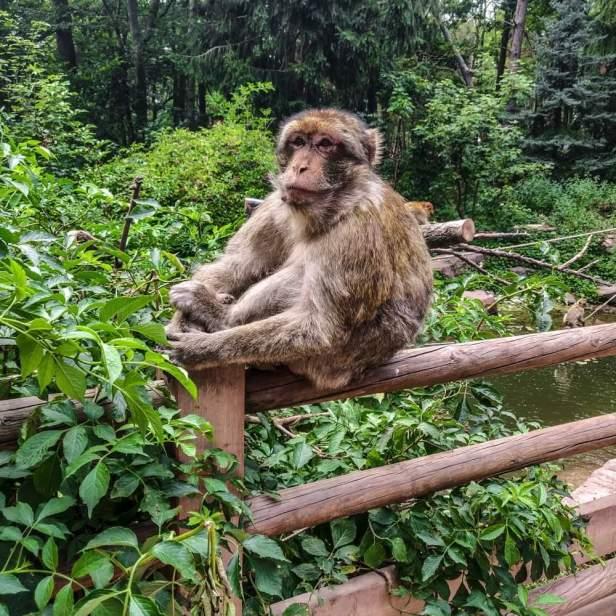 Montagne des singes Alsace