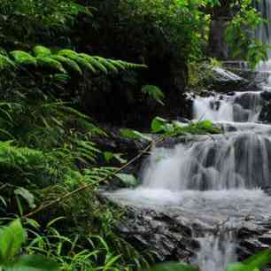 wayanad waterfall