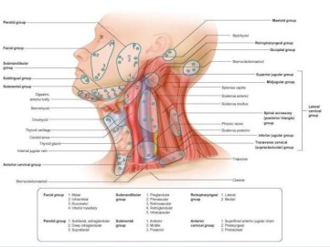 lymphatic-drainage-of-head-neck-80-638