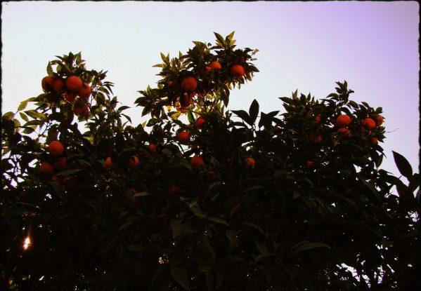 Relacja z Rzymu - My Travel Blog 14