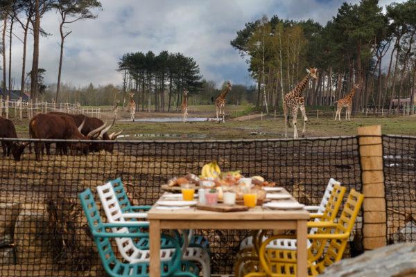 Safari Resort Beekse Bergen