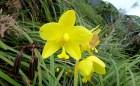 Poetry in Nature. Wild flowers. Madjaas