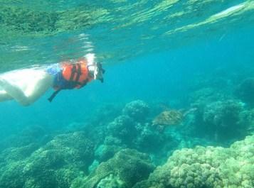 Apo Island Itinerary