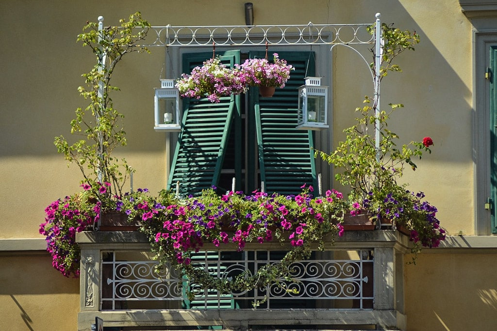 Geraniums everywhere in Lucca, what to do in Lucca for a half day