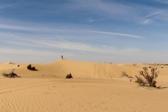A desert landscape...