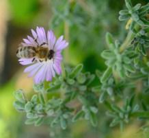 Honey maker...