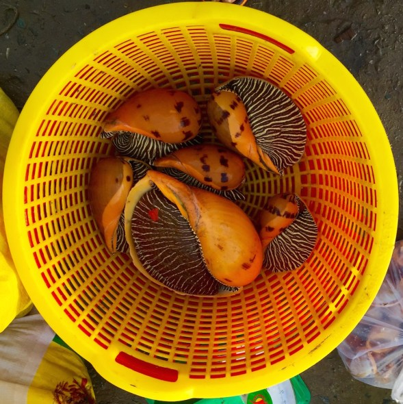 In Vietnam I spied a basket, a better look at the amazing mollusc pattern....