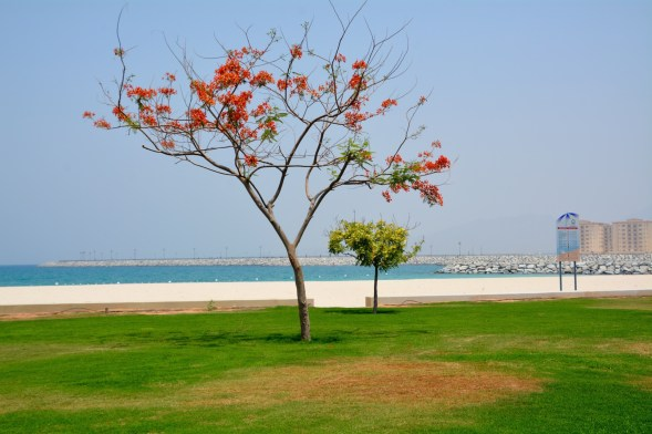 Beach 1 by Dibba border post on the coast road