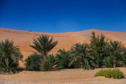 Pustynna przygoda w Emiratach