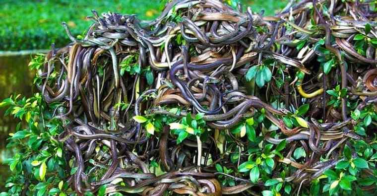 Snake Island, Brazil