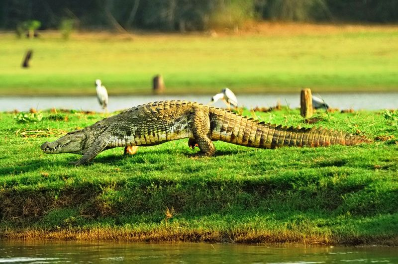 Best Trip Destinations For Wildlife Lovers With Jungle