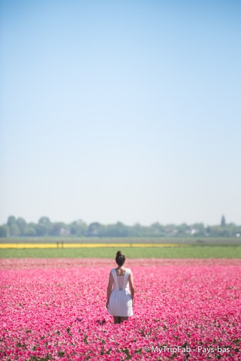 Les chamos de Tulipes
