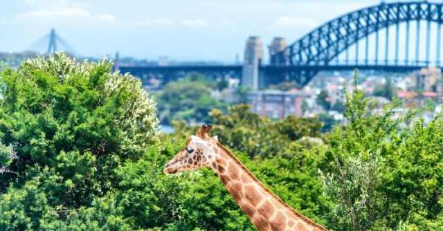 Top Zoos in Australia