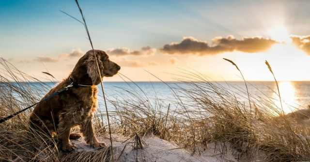 Must-have items every dog owner needs