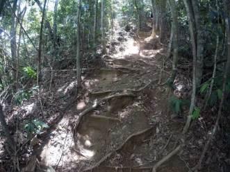 corcovado-trail