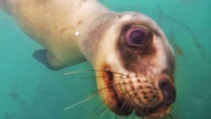 sea lion upclose