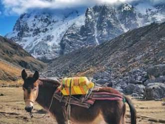 salkantay-horse