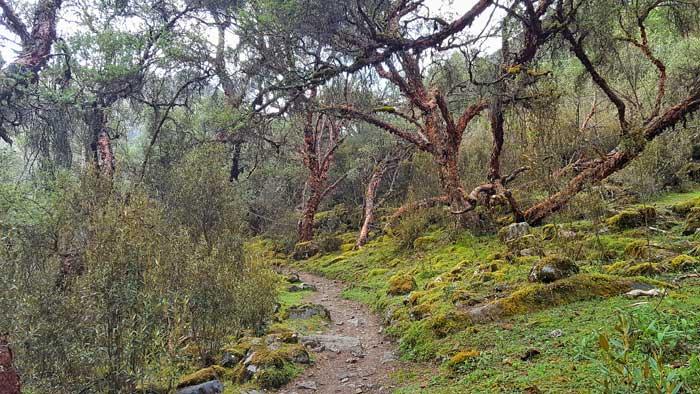 santa-cruz-greenery