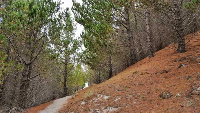 trek-terrain