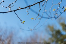 Mar 2 Signs of Spring