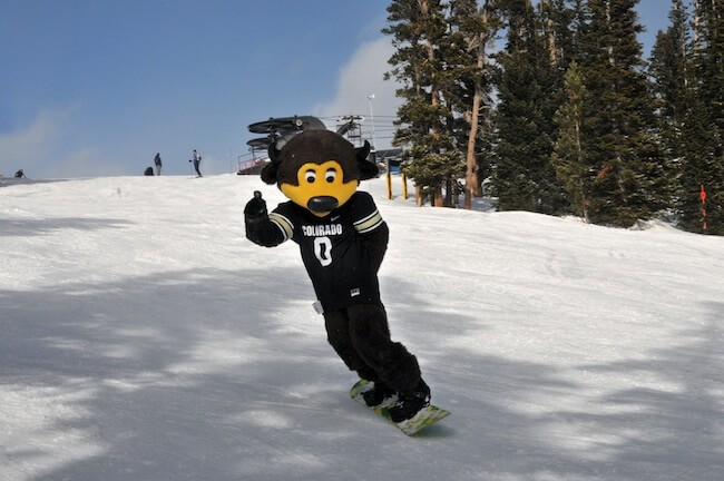 CU Buffs Mascot
