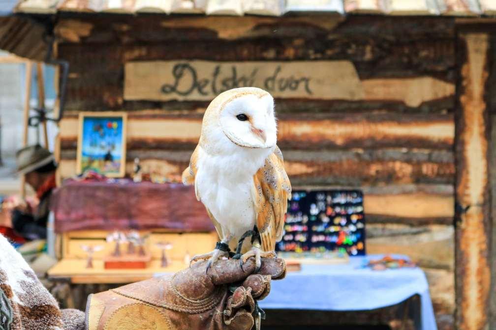 Bratislava Christmas markets owl
