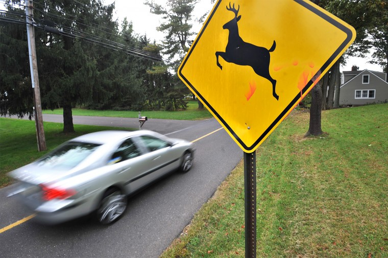 {我見我思} 撞到鹿