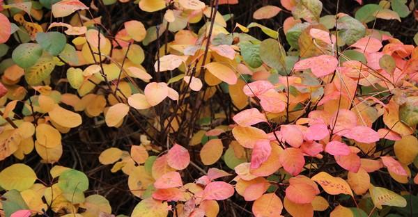 natureIMG_6799VanDusenFall