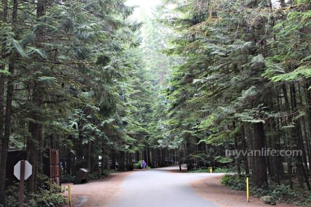 CampingBeeIMG_3371CampgroundEnvironment