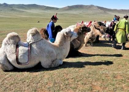 西伯利亞壯遊記|之十 聽馬頭琴樂聲,暢飲馬奶酒,蒙古包裡的牧民生活