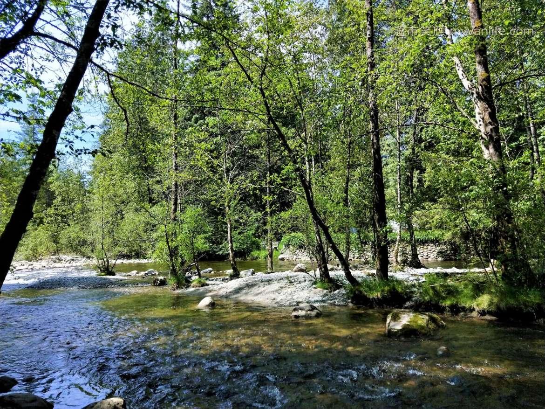 溫哥華旅遊|在往瀑布的路上遇到鹿