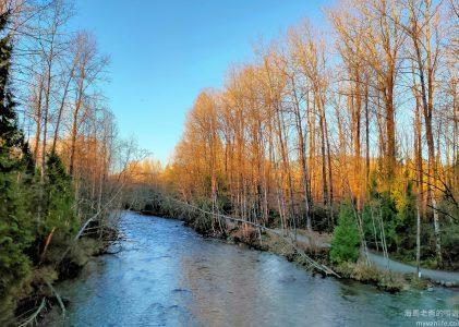 溫哥華旅遊|森林深處的夕陽與屍臭,冬季河岸的美麗與哀愁