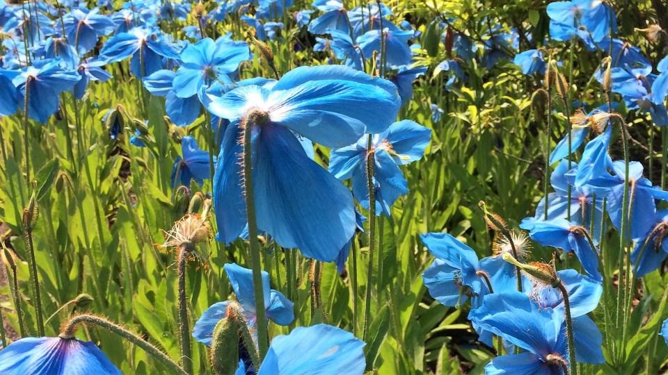 edinburgh botanics
