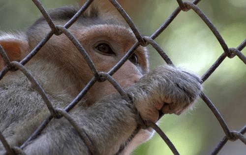 bad zoo