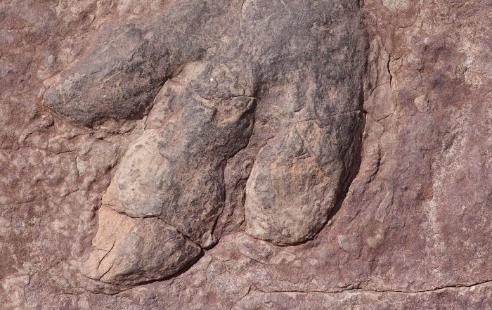dinosaur footprint scotland