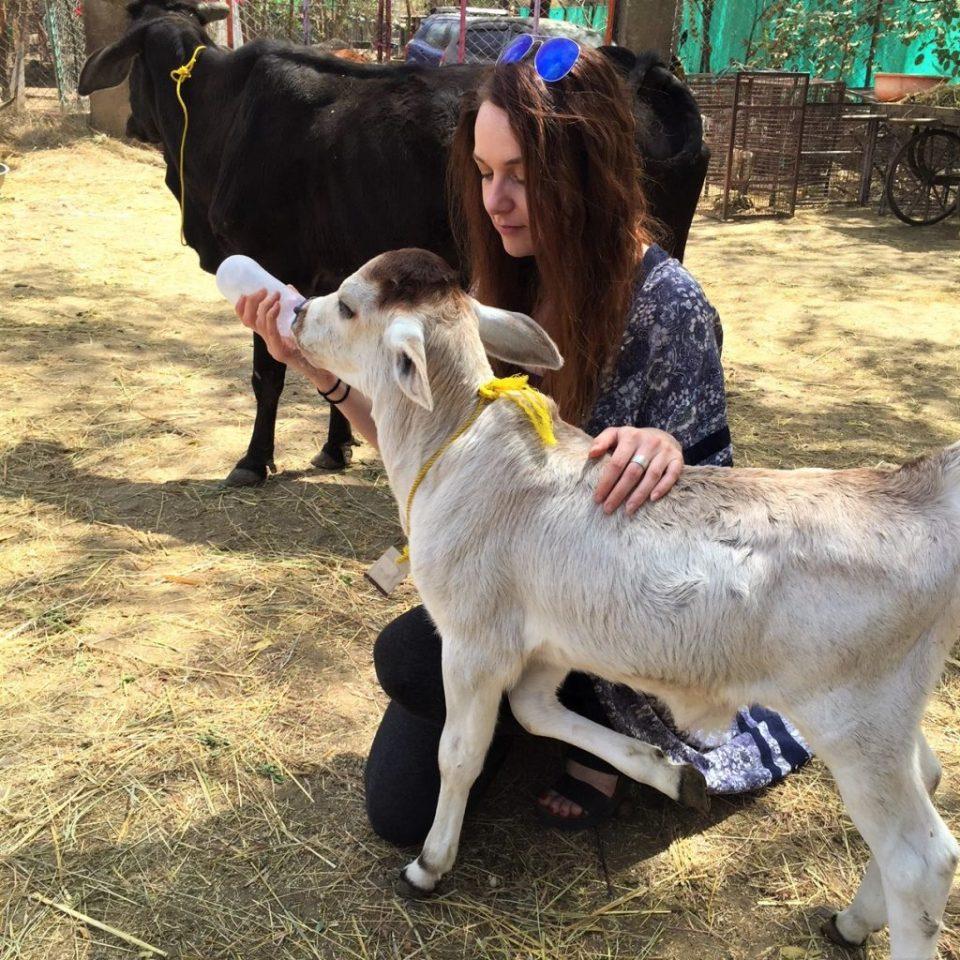 Animal Aid India