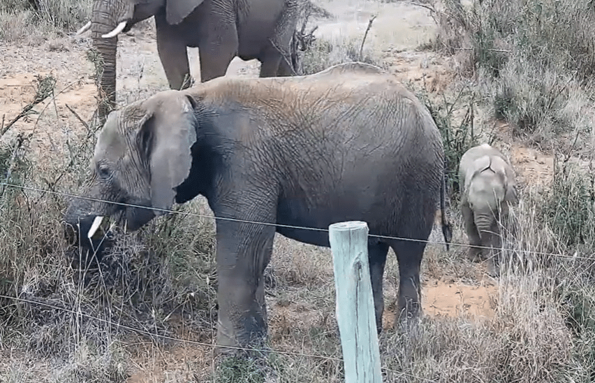 african wildlife live cams