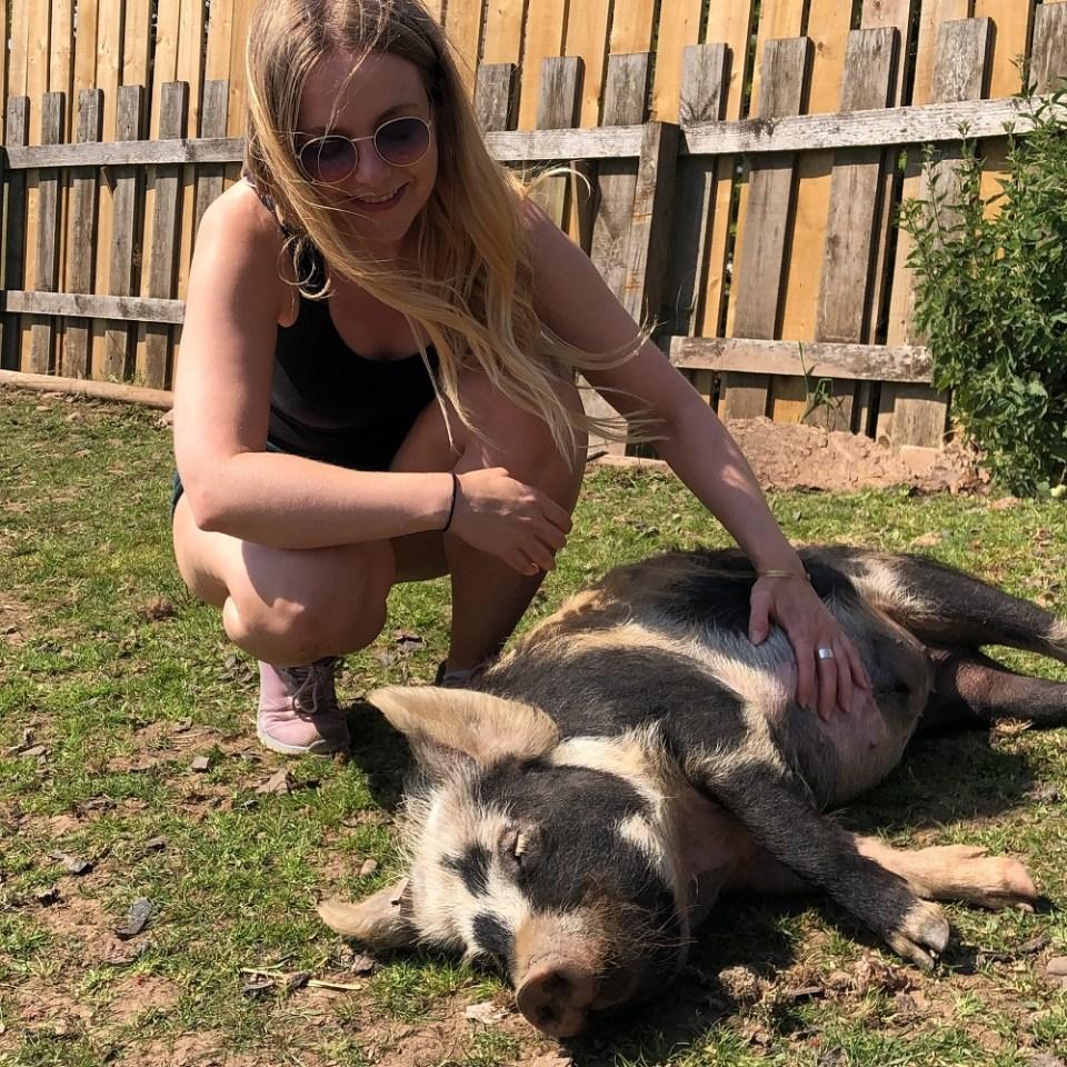 pig rescue sanctuary scotland