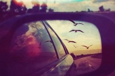 birds-car-photography-summer-favim-com-1080255