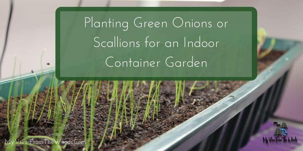 planting green onions