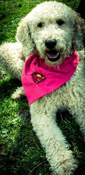 Supergirl - Dog show